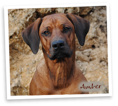 Rhodian Red´s Amber